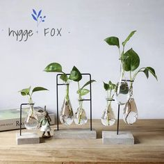 An unique simple ornament and slim design, vase wood set, that see the beauty of life. Item Specifics: Materials: Wood, Glass Size Options: Single Vase – H 14 x L 8 (in CM) Double Vases H 24 x L 16 (in CM) Triple Vases H 30 x L 11 (in CM) Packaging: ea Dry Plants, Cool Plants, Indoor Plants, Indoor Gardening, Live Plants, Hygge, Vases Decor, Plant Decor, Mini Vase