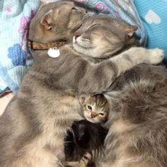 cute happy cat family
