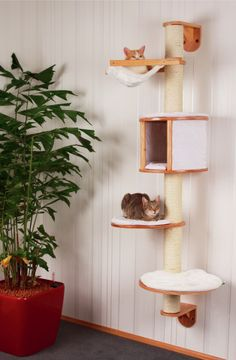 Aparte krabpaal gekocht voor mijn kitty