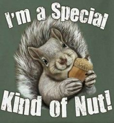 childrens picture book about a squirrel who eats a whole in a pocket Secret Squirrel, Squirrel Girl, Cute Squirrel, Squirrels, Squirrel Cake, Baby Animals, Funny Animals, Cute Animals, Funny Animal Pictures
