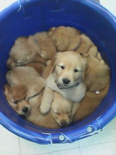 We got a real good bucket o' pups here, but I'm docking points for BLURRINESS. | Top 30 Cutest Buckets Of Puppies