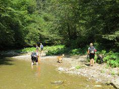 Survival, Dogs, Outdoor Adventures, Pet Dogs, Doggies