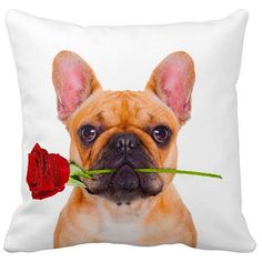 ileesh French Bulldog Fawn With a Rose 16-inch Throw Pillow (Valentines French Fawn Bull Pillow), White, Size 16 x 16 (Polyester, Animal)