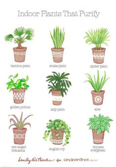Simple Natural Living: The Best Air-Purifying Plants For Your Home