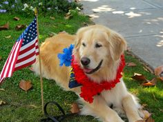 UCLA PAC Volunteer Banjo is taking a little rest at the 4th of July parade in Pacific Palisades
