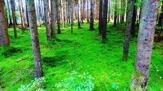 Im Wald von Oberhaching