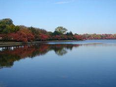 Fall Foliage Photos - A Gallery of the Washington, DC Area: Tidal Basin