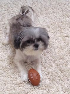 reunited 7/6/14 Please help me find my shih tzu lost on Flanders rd, woodbury ct.CT Lost Pets shared Cindy Medina's photo.