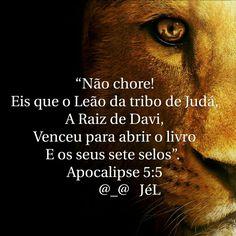 Leão da Tribo de Judá                                                       …