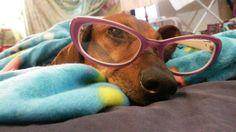 Jinkies! bozz wearing my cat eye glasses :3