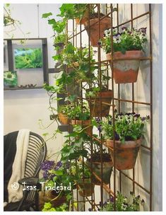 Indoor Climbing Plants, Hanging Plants, Indoor Plants, House Plants Decor, Plant Decor, Flowering Vines, My Secret Garden, Plant Wall, Landscaping Plants
