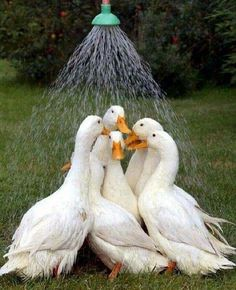 Duck'n in the Summer ☼