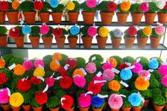 Manjericos: in Lisbon lovers offer basil plants decorated with paper flowers and popular rimes to show their love on St. Antonio's day.