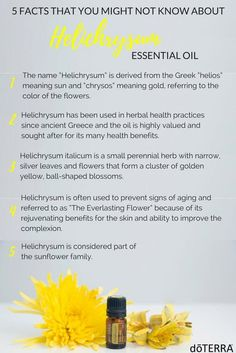 Referred to by some as the Everlasting or Immortal Flower, the Helichrysum plant offers several benefits to the skin. With rejuvenating and restorative properties, doTERRA Helichrysum essential oil ha (Ingredients Beauty Essential Oils) Essential Oils For Anxiety, Best Essential Oils, Young Living Essential Oils, Essential Oil Blends, Helichrysum Essential Oil Uses, Helichrysum Oil, Healing Oils, Young Living Oils, Doterra Essential Oils