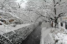 You know you wanna! Three Kyoto winter cuisine and culture tours Dec 2014 - Feb Don't miss out. Be on the mailing list - e-brochures about to land! Kyoto Winter, Japanese Travel, Win A Trip, Tours, Japanese Culture, Foodie Travel, Tour Guide, Fall Winter, Autumn