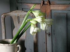 A Gustavian Christmas by Mäster Henriks In fact there is a white amaryllis blissfully flowering on my kitchen sideboard Woodland House, Interesting Blogs, Swedish Style, European Style, Grey Gardens, Simple Flowers, Bulb Flowers, White Flowers, Brick And Stone
