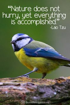 """Nature does not hurry, yet everything is accomplished."" Heart-warming meditation quotes by Lao Tzu and other teachers here: https://bookretreats.com/blog/101-quotes-will-change-way-look-meditation"