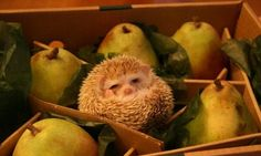 #cute #hedgehog