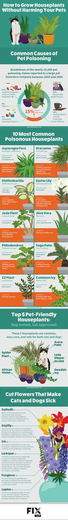 Houseplants and pets don't always mix. Learn which plants are safe and which you should be avoiding!