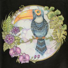 Book: Magical Jungle by Johanna Basford Medium: Prismacolor Premier pencils and black Posca pen