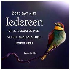 spreuken over vliegen 1521 beste afbeeldingen van spreuken   Dutch quotes, Best quotes  spreuken over vliegen