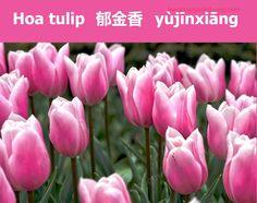 Học từ vựng tiếng Trung qua ảnh về các loài hoa (p3)