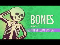 The Skeletal System: Crash Course A&P #19 by thecrashcourse: Today Hank explains the skeletal system and why astronauts Scott Kelly and Mikhail Kornienko are out in space studying it. He talks about the anatomy of the skeletal system, including the flat, short, and irregular bones, and their individual arrangements of compact and spongy bone. He'll also cover the microanatomy of bones, particularly the osteons and their inner lamella. And final