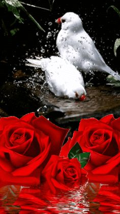 Flying Jewels, God`s Awesome & Gorgeous Creation. Rose Flower Wallpaper, Wallpaper Nature Flowers, Flowers Gif, Beautiful Flowers Wallpapers, Beautiful Nature Wallpaper, Beautiful Romantic Pictures, Romantic Gif, Beautiful Rose Flowers, Beautiful Gif