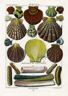 Shell Prints from La Conchyliologie by Dezallier dArgenville, 1780