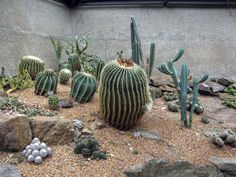 This digital photography of Cactus Gardens Mount Coot Tha Gardens ...