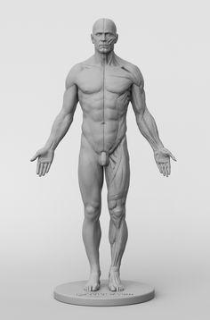 Afbeeldingsresultaat voor 3d total anatomy figure