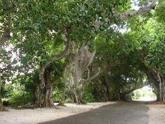 Banyan St. Boca Grande, FL
