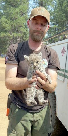 White Wolf: Bobcat Kitten Rescued By Northern California Firefighters (Photos-Video)