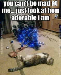 visit www.amazingdogtales.com for the best funny dog joke pics,inspirational dog stories and dog news.... Kitties love Christmas trees