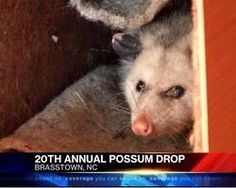 Stop the NC Possum Drop! - Care2