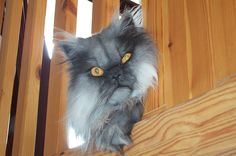 cat-you-re-doing-it-wrong-high-resolution-desktop-hd-wallpaper-23431.jpg (1760×1168)