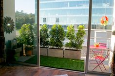 small shrubs/trees in corner planter - smaller end