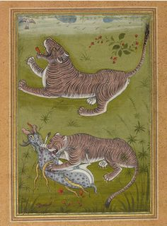 Two Studies of a Tiger, Mughal, India. ca. 1570-80