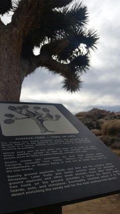 Joshua Tree, Tree of Life