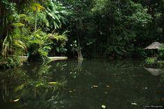 Jardim Botânico da Amazônia by Macapuna, via Flickr
