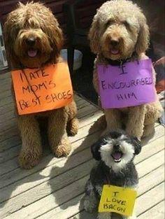Dog shaming #dogshaming I love the little guy! haha