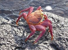 The Most Beautiful Crabs In The World