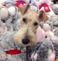 I love the stuffed kitties at Petsmart. Can I have them all?