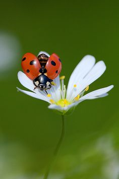 lady bugs bees flowers - photo #47