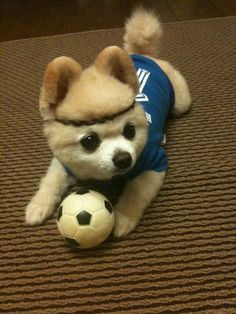 stay away from my ball... *barks*