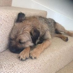 Twitter / Molly_Border: I enjoy nothing better than a good stair nap
