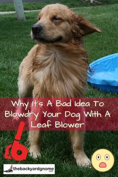 In this article, we talk about why you shouldn't be blowdrying your dog with a leafblower. Dog Grooming Tips, Eyes Problems, Positive Reinforcement, Leaf Blower, Blow Dry, Your Pet, Pup, Dog Cat, Backyard