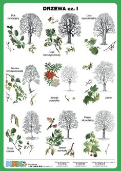 Opposite Words, English Vocabulary, Math Lessons, Bushcraft, Learn English, House Plants, Activities For Kids, Diy And Crafts, Flora