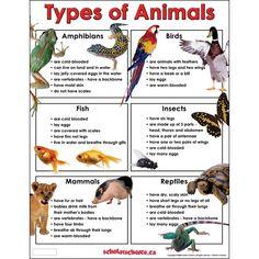 Types of Animals Chart