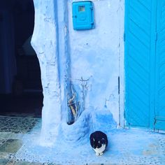 In a blue city Chefchaouen, Morocco Hello Cat, Blue City, Morocco, Cats, Color, Gatos, Colour, Kitty Cats, Cat